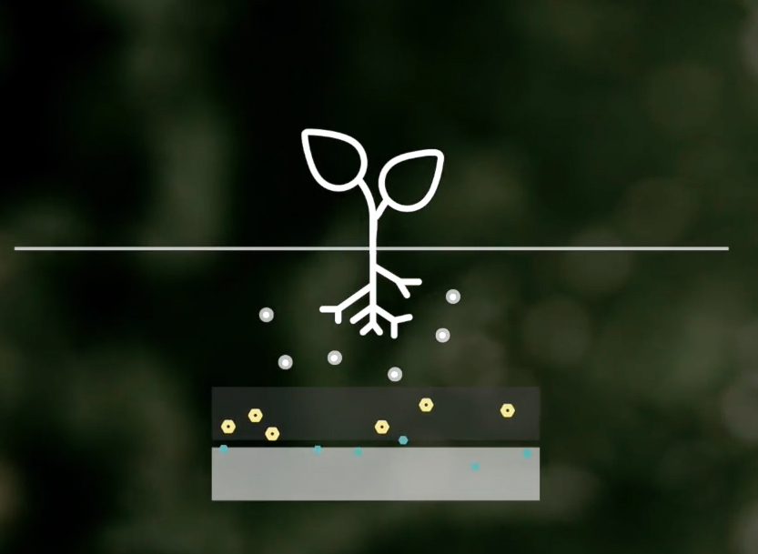 energie-plante-lumiere