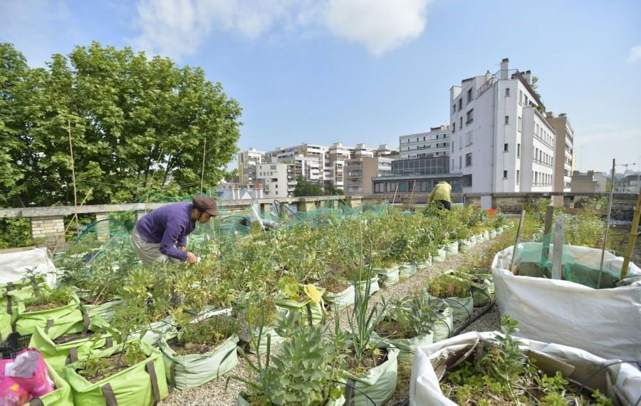 Europacity fermes urbaines